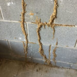 Termite Inspections by First Choice Home Inspections - serving Fredericksburg - Williamsburg - Virginia